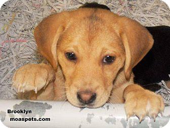 Beagle/Hound (Unknown Type) Mix Puppy for adoption in Danielsville, Georgia - Brooklyn