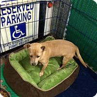 Adopt A Pet :: FINN - Elk Grove, CA