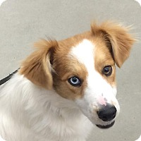 Adopt A Pet :: Macbeth - New Oxford, PA