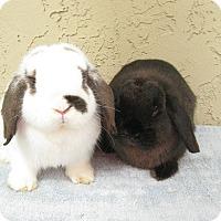 Adopt A Pet :: Bear & Dundee - Bonita, CA