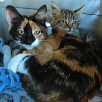 Adopt A Pet :: Miracle - Tonopah, AZ