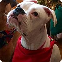 Adopt A Pet :: Swann - Hurst, TX