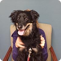 Adopt A Pet :: Gracie - All Cities, SC
