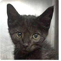 Adopt A Pet :: Keith - Springdale, AR