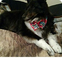 Adopt A Pet :: Reuben - COLUMBUS, OH