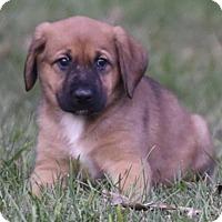 Adopt A Pet :: Benjamin - Mechanicsburg, PA