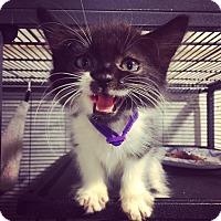 Adopt A Pet :: Eliza - Bensalem, PA