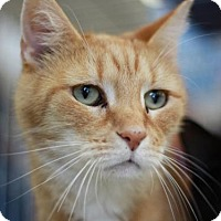Adopt A Pet :: Buddy - 12 years old - FREE TO ADOPT! - Cookeville, TN
