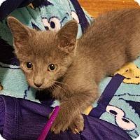 Adopt A Pet :: Wilde - Huntley, IL