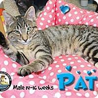 Adopt A Pet :: Pat - Davenport, IA