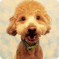 Adopt A Pet :: Hurley - Branford, CT
