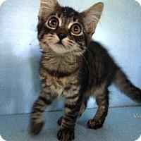 Adopt A Pet :: Brenda - Savannah, GA