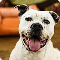 Adopt A Pet :: Chancey - Lake Odessa, MI