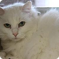 Adopt A Pet :: Marvelous Madam Mim - Ennis, TX