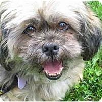 Adopt A Pet :: Lloyd - Rigaud, QC