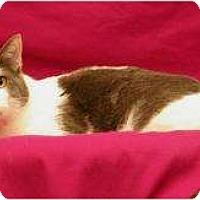 Adopt A Pet :: Picasso - Sacramento, CA