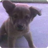 Adopt A Pet :: Starla - Fowler, CA