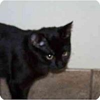 Adopt A Pet :: Phoebe - Secaucus, NJ