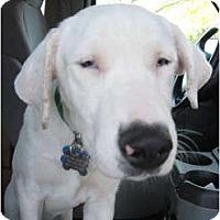 Adopt A Pet :: Zinnia - Mesa, AZ