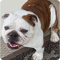 Adopt A Pet :: Midge - San Diego, CA