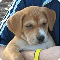 Adopt A Pet :: Maggie May - Cumming, GA