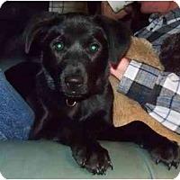 Adopt A Pet :: Emmie - Belleville, MI