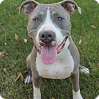 Adopt A Pet :: ROADRUNNER - Gilbert, AZ