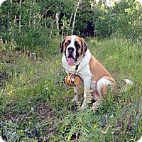 Adopt A Pet :: Perma Foster Axel - Denver, CO