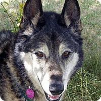Adopt A Pet :: EPIC - Boise, ID