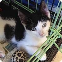 Adopt A Pet :: Charleston - Island Park, NY
