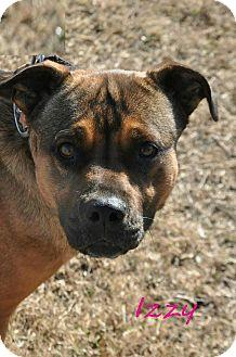 Boxer/German Shepherd Dog Mix Puppy for adoption in Davis, Oklahoma - Izzy OKs31
