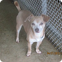 Adopt A Pet :: Patrick - Ormond Beach, FL