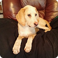 Adopt A Pet :: Lucky - Hillsboro, IL