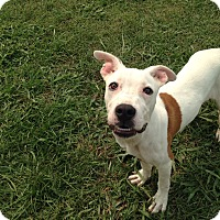 Adopt A Pet :: BEAUREGARD - EDEN PRAIRIE, MN
