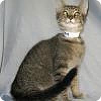 Adopt A Pet :: Kilroy - Powell, OH