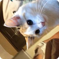 Adopt A Pet :: Lily - East McKeesport, PA
