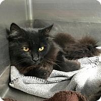 Adopt A Pet :: Viper - Webster, MA