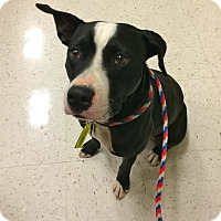 Adopt A Pet :: Luna IN CT - Manchester, CT