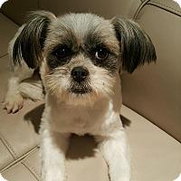 Adopt A Pet :: Emma - Buena Park, CA