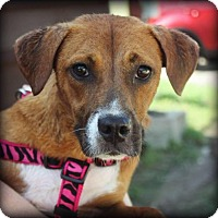 Adopt A Pet :: Jinney - Rexford, NY