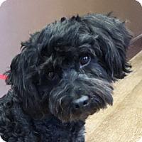 Adopt A Pet :: Rascal - Atlanta, GA