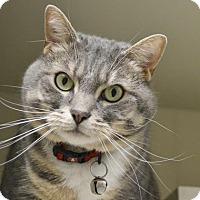 Adopt A Pet :: Nala - Fairport, NY