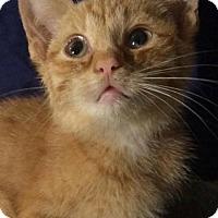 Adopt A Pet :: Gladys - Ashland, KY
