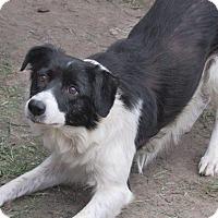 Adopt A Pet :: Josie - Aurora, CO