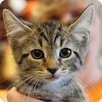 Adopt A Pet :: Robb - Potomac, MD