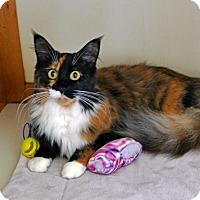 Adopt A Pet :: Skyler - Victor, NY