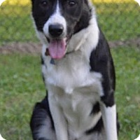Adopt A Pet :: Emmitt - Highland, IL