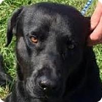 Adopt A Pet :: Jaxon - Silver Spring, MD