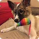 Adopt A Pet :: Bendel - NEEDS FOSTER!