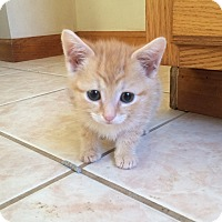 Adopt A Pet :: Nick - Plainville, CT